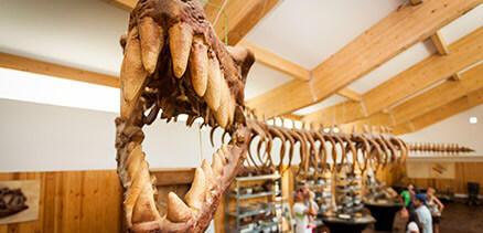 Circuito paleontológico
